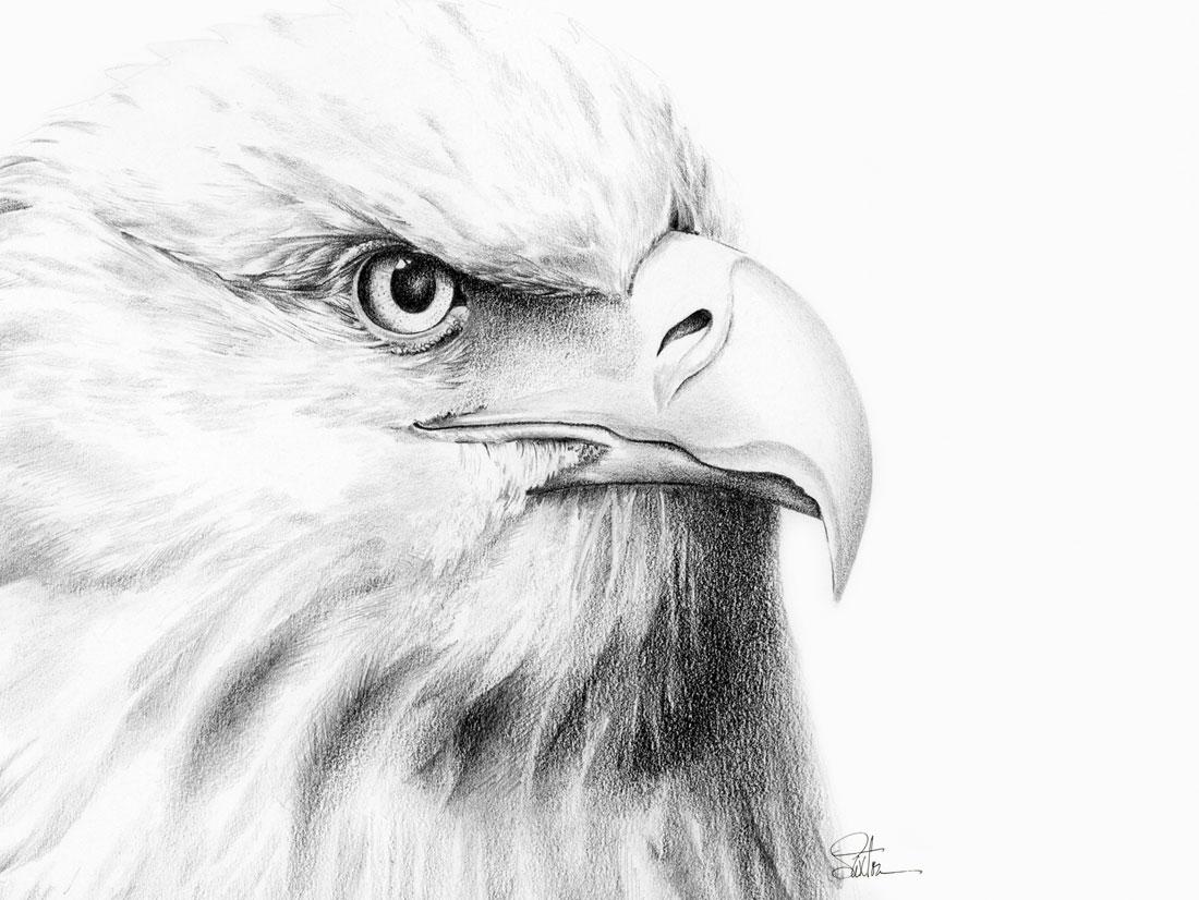 eagle_1100X836